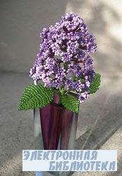Flieder / Lilac