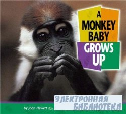A Monkey Baby Grows Up