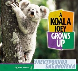 A Koala Joey Grows Up