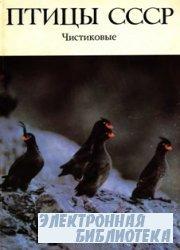 Птицы СССР. Чистиковые