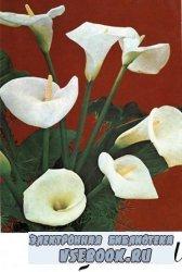 Цветы. Комнатные растения и декоративные кустарники