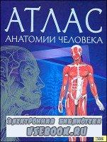 Атлас анатомии человека. Схемы, рисунки, фотографии