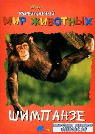 Удивительный мир животных. Шимпанзе
